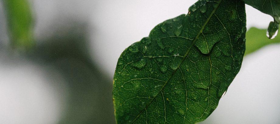 Zmiana systemu opłat w ochronie środowiska