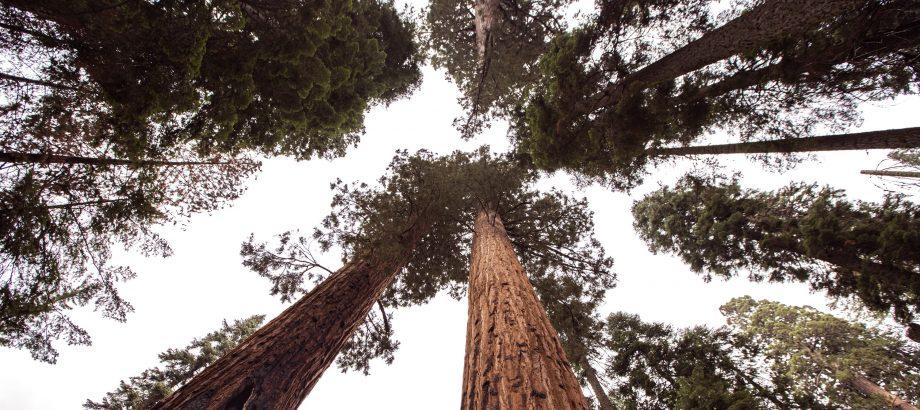 Demony wyciętych drzew, czyli o tym dlaczego wycięte drzewo może kosztować po latach